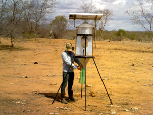 Armadilha em uso no campo (Foto: Denes Vidal)